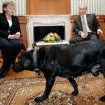 Putin: mój pies daje dobre rady