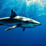5 filmów o rekinach, których nie się da opisać, ale które musisz obejrzeć