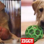 Tak kochali swojego psa, że go sklonowali za 50 tysięcy dolarów