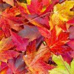 Dlaczego jesienią liście zmieniają kolor?